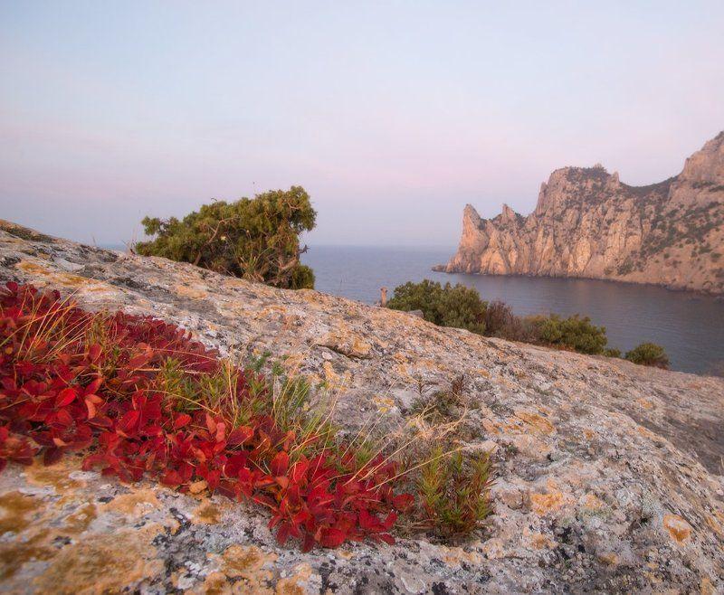 крым, море, горы, свет, закат, рассвет, природа, осень Этюд со скумпиейphoto preview