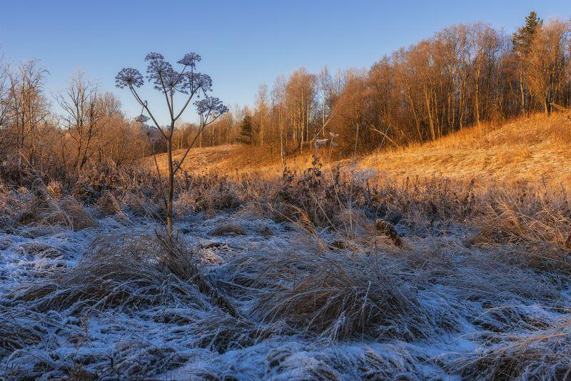 осень,рыжая,зима,синяя,иней,лес,трава,зонтик На грани межсезоньяphoto preview