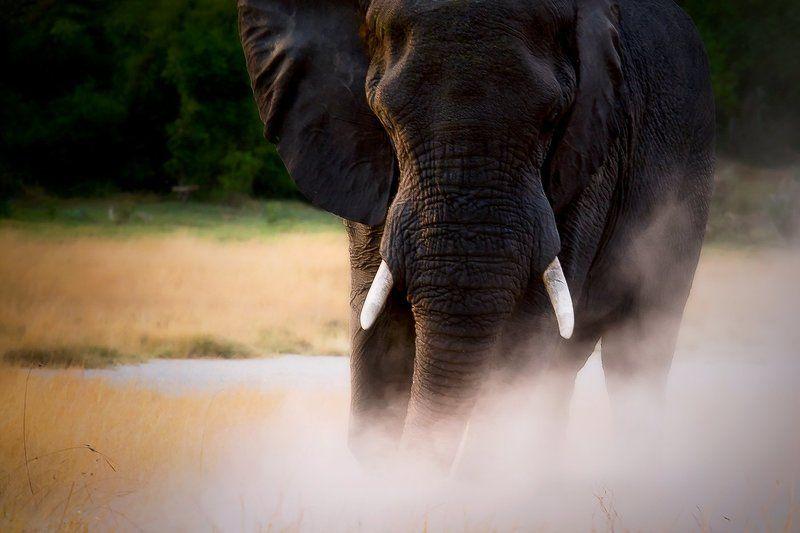 Elephant with Okavango Deltaphoto preview