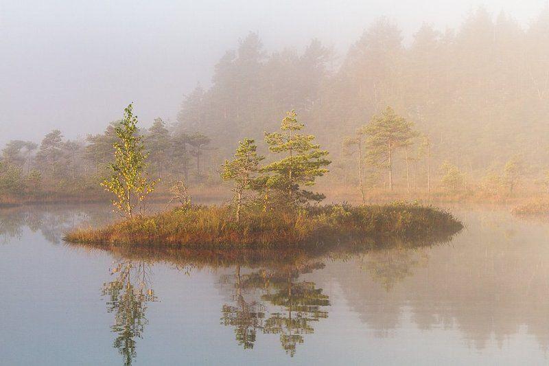 swamp, kemeri, latvia, lake,fog,  Kemeri swampphoto preview