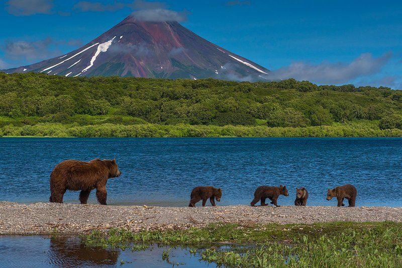 камчатка, фототур, путешествие, природа,  пейзаж, вулкан, медведь, озеро, заповедник Семейная прогулкаphoto preview