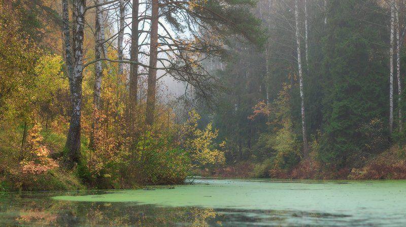 осень, павловск, павловский, павловский парк, питер Осень без солнца.......photo preview
