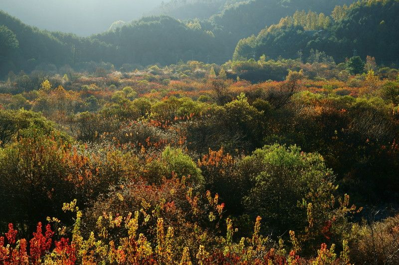 asia,korea,south korea,gangwondo province,autumn,sunlight,mountain,forest,nature,landscape,backlight, Morning light in the mountainphoto preview