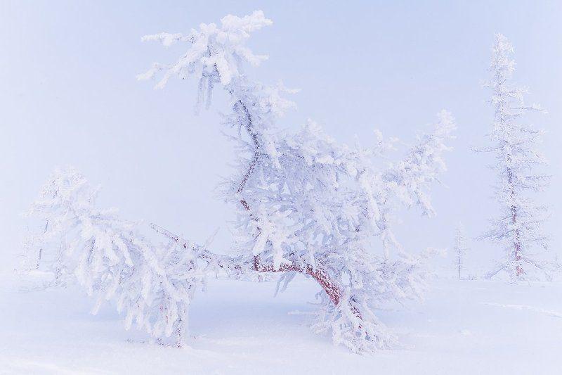ямал, полярный урал, зима, мороз, снег, иней, лед, холод, север, russian landscape, north, yamal, urals, winter, frost, snow, ice, cold Белоснежное настроениеphoto preview