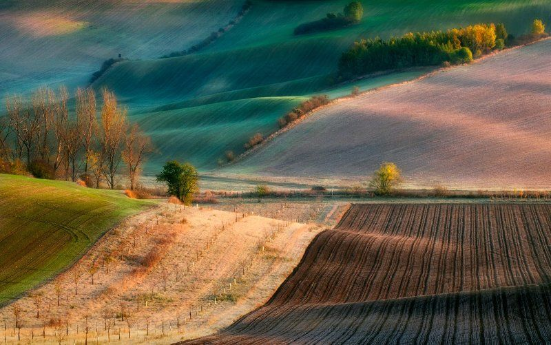 Моравия, волны, поля, утро, деревья, осень, рассвет Утреннее волнениеphoto preview