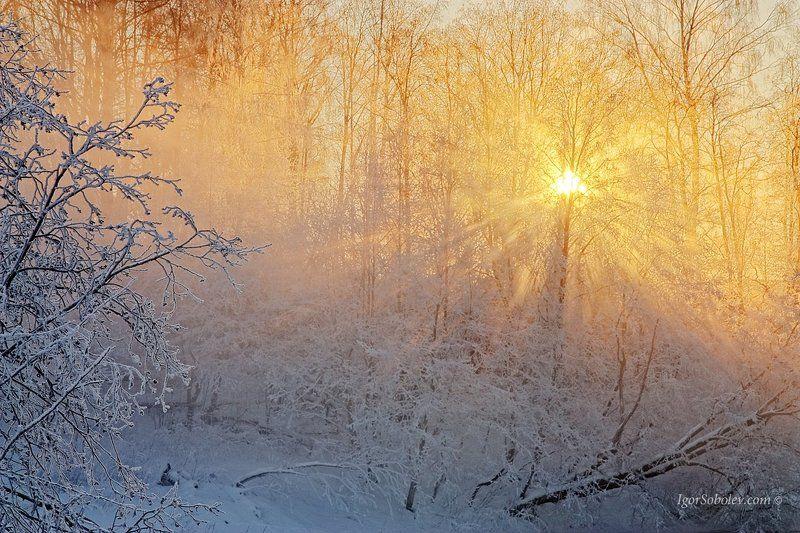 Зима, Истра, Лучи солнца, Подмосковье, Солнце Луч солнца золотого...photo preview