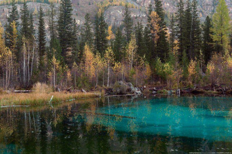 Гейзеровое озеро, Алтай, Россия, Гейзеровое, озеро, гейзер, голубой, глина, дерево, осень, лес, вода, пруд,  Гейзеровое озероphoto preview