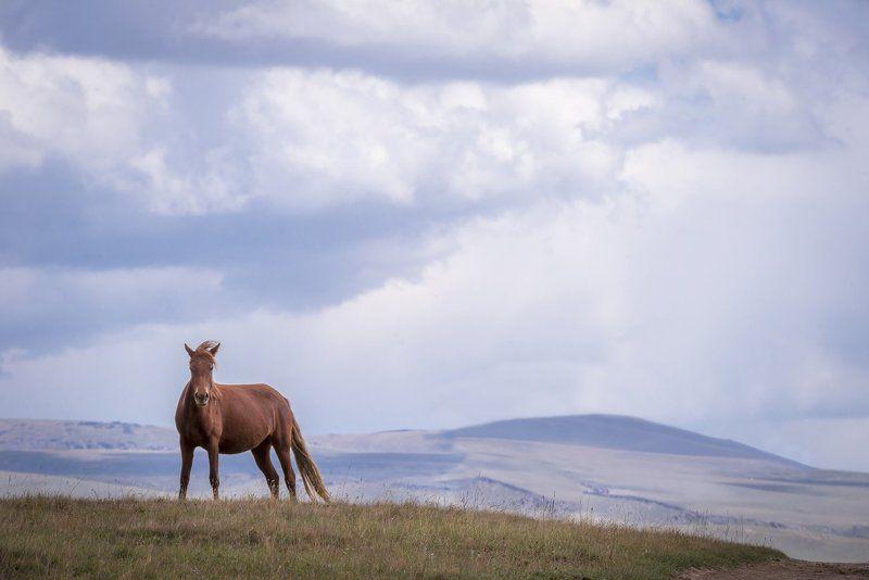 киргизия, горы, озеро, сонкёль, лошади, юрты, юрта, григорий беденко, grigoriy bedenko, Сонкёльphoto preview