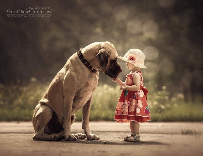 собака, ребенок, дети, немецкий дог Маленькая хозяйка большой собакиphoto preview