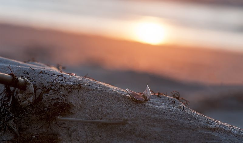 sunset,sea shells Sunset for all...photo preview