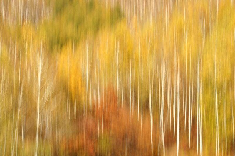 asia,korea,south korea,gangwondo,autumn,birch tree,mountain,tilting,nature Variation of birchphoto preview