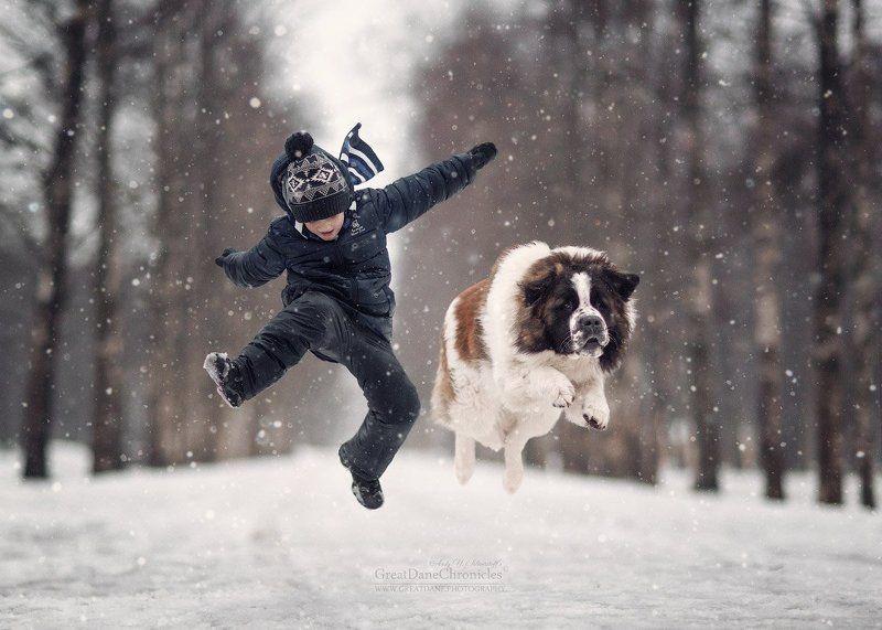 Зима, собака, московская сторожевая Это Зима!photo preview