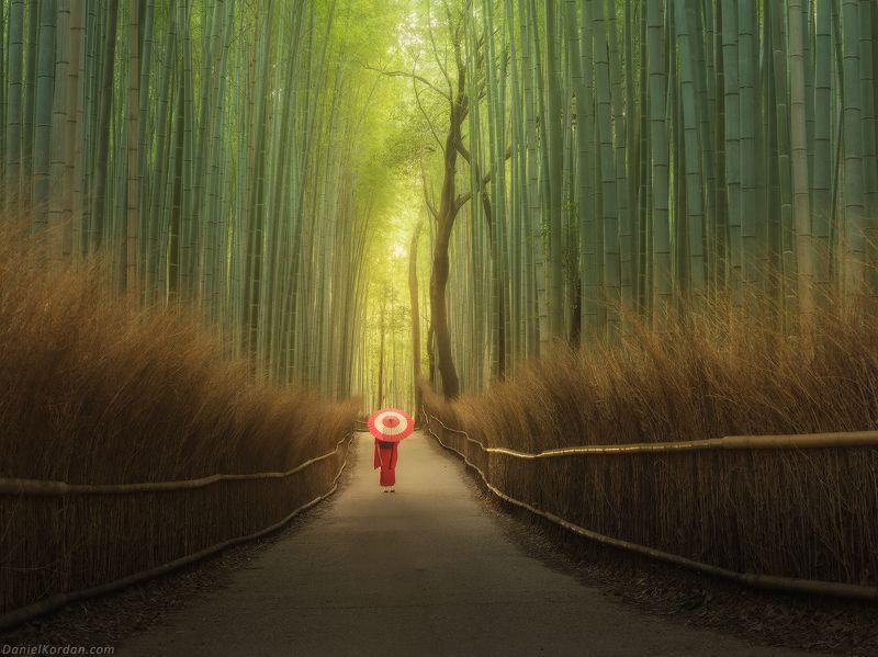 Япония Бамбуковый лес Арашиямыphoto preview