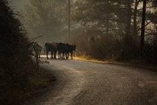 Roads and passengers