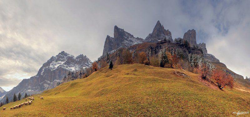swiss Альпийская пасторальphoto preview