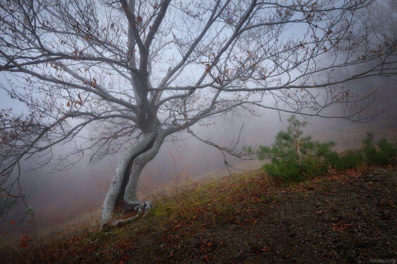 крым лес Красоты крымского лесаphoto preview