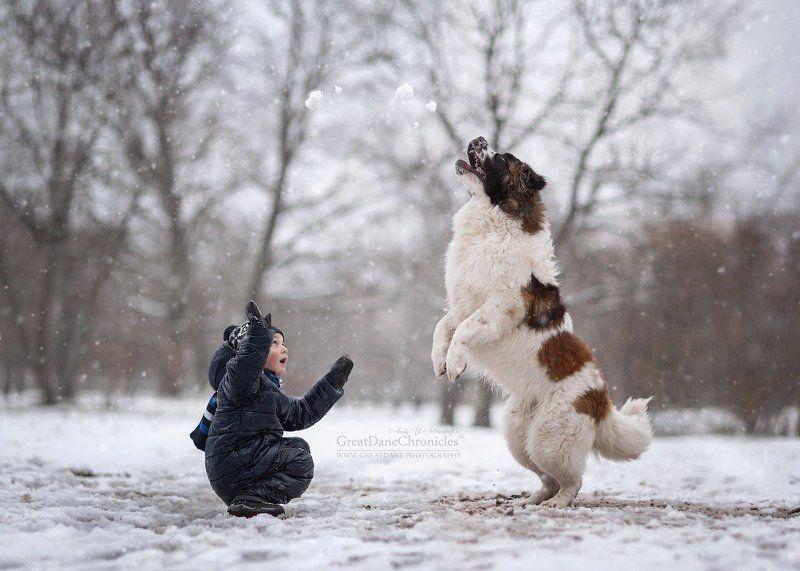 зима, собака, дети, московская сторожевая В последний день осениphoto preview