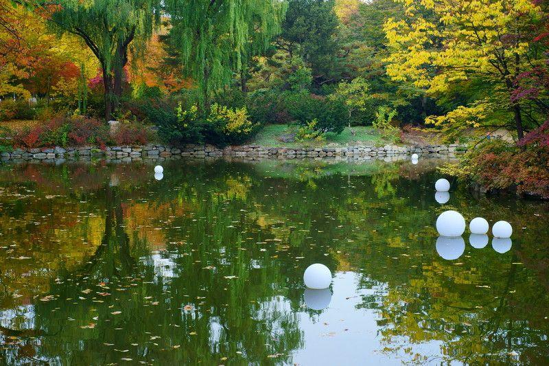asia,korea,south korea,seoul,palace,changgyeonggung palace,pond,ball,reflection,autumn, Reflectionphoto preview