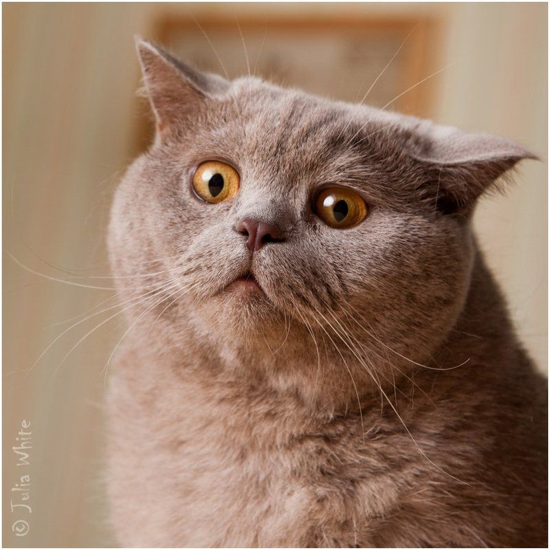 кот, удивление, шок, cat Ё-МОЁ!!photo preview