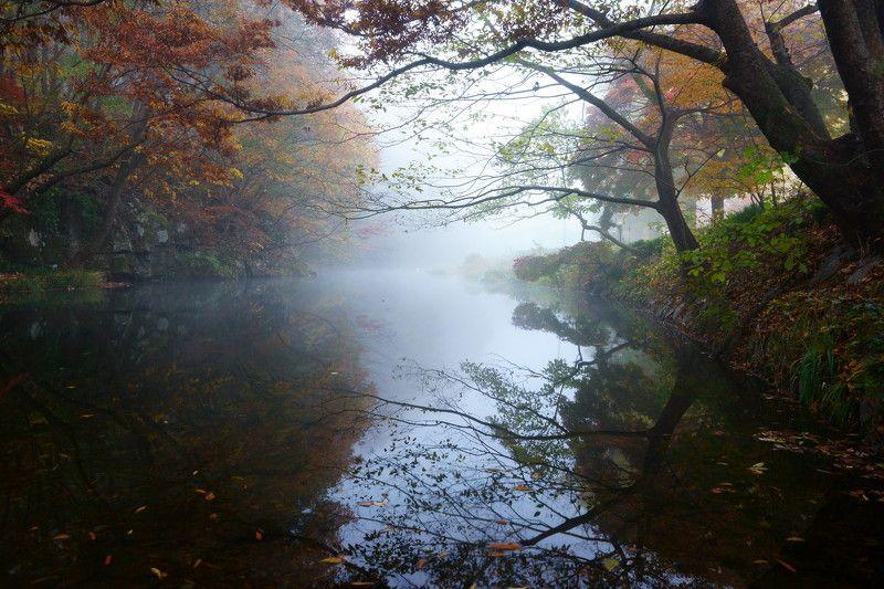 asia,korea,south korea,jeollabukdo,seonunsa temple,morning,misty,stream,fog,reflection Misty streamphoto preview