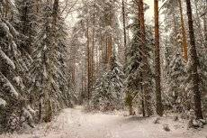 Тихо в лесу.