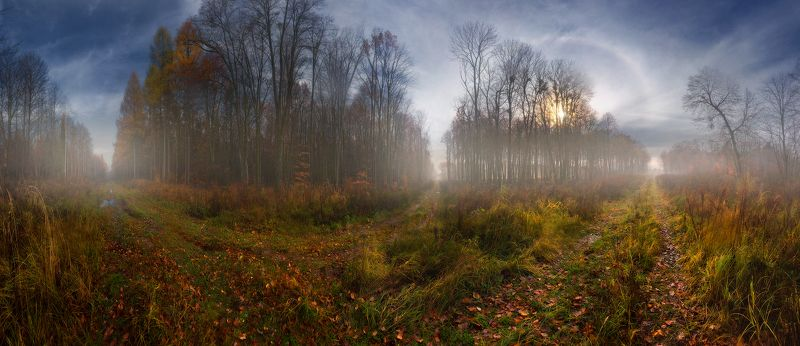 осень, ноябрь, лес, утро, дороги, перекресток, солнце, туман, гало Осенние перекресткиphoto preview