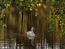 лебединое озеро 4