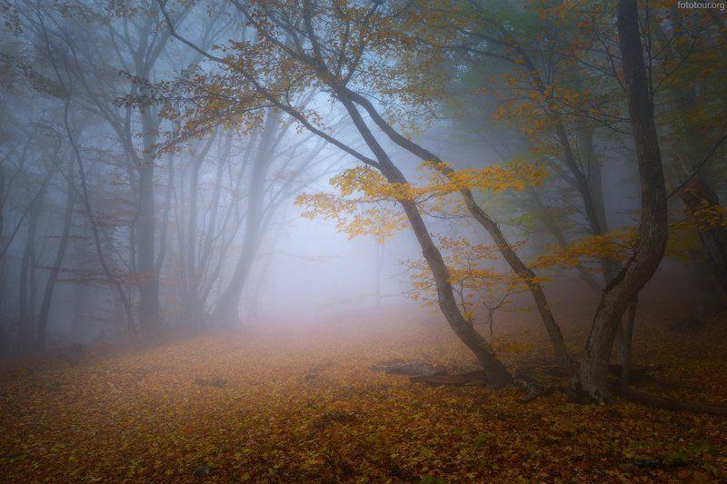 крым, лес, туман Лесные тропкиphoto preview