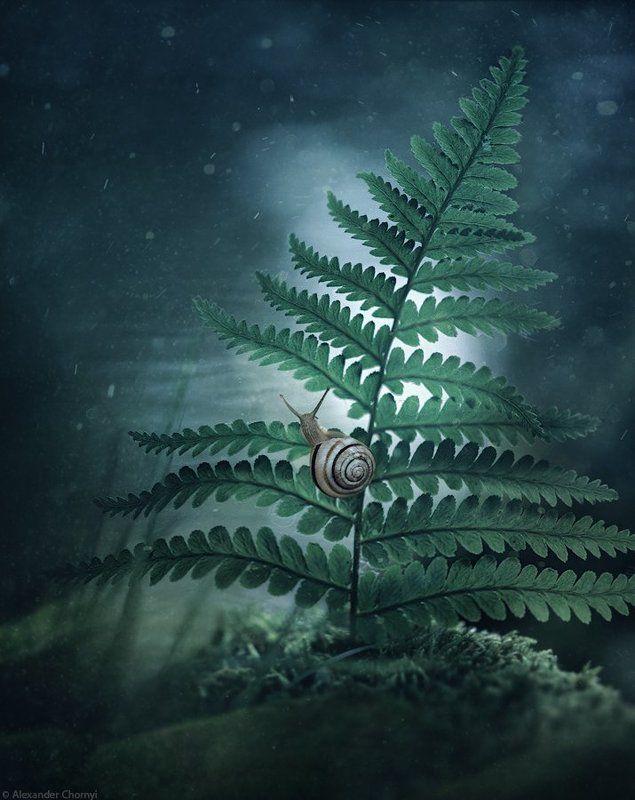 украина, коростышев, лето, лес, красота, макро, макро мир, природа, макро-красота, В ночь, дождавшись тишины...photo preview