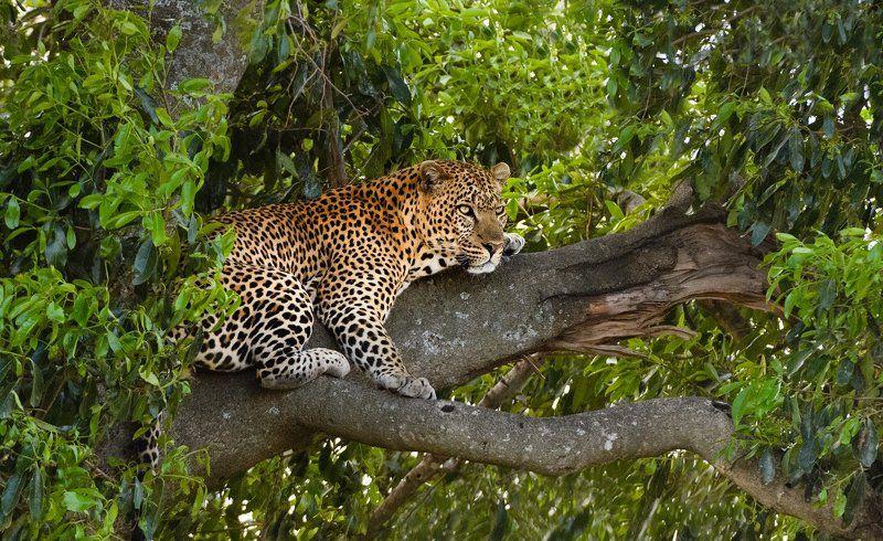 кения Кошка на деревеphoto preview