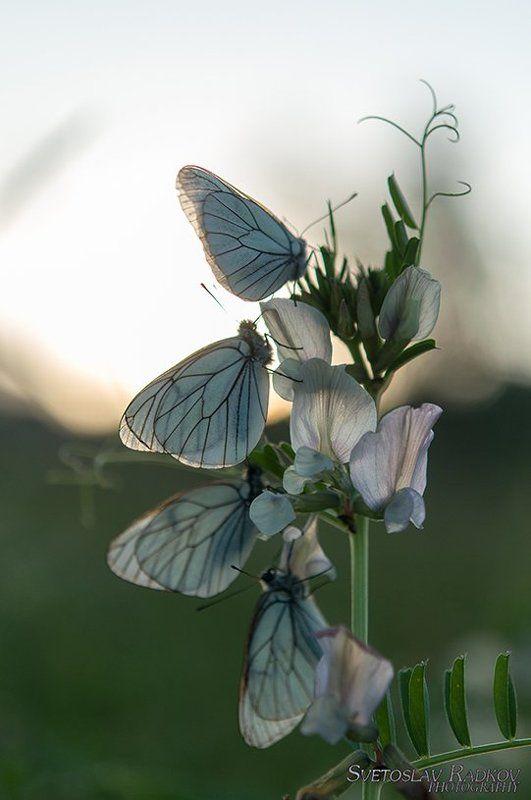 Овощни пеперудиphoto preview