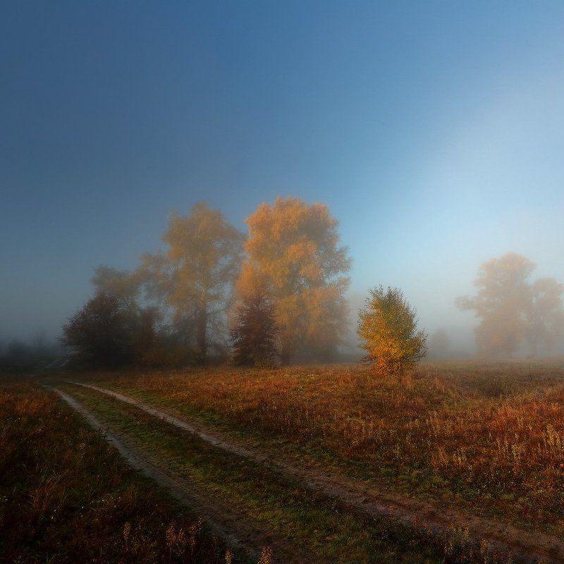 дорога,осень,туман,утро Осенний сон.photo preview