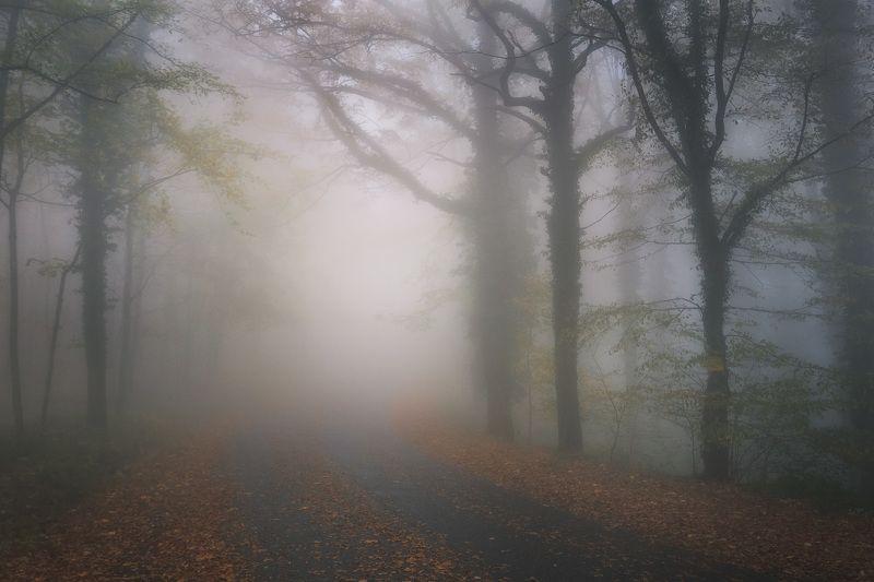 Дорога в туманphoto preview