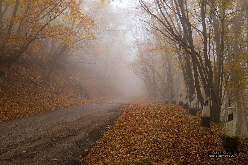крым, ай-петри, бахчисарай, буковый лес, бук, деревья, туман, дорога, листва, осень Следуя за белым кроликомphoto preview