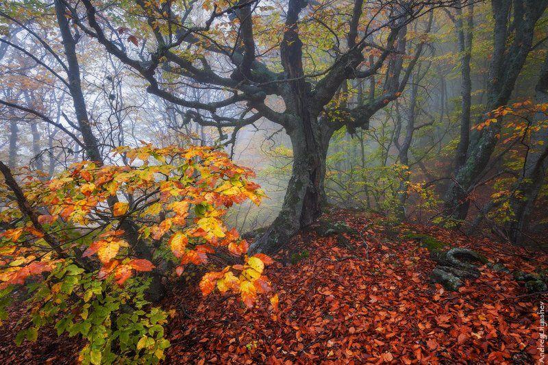 крым демерджи осень лес туман * * *photo preview