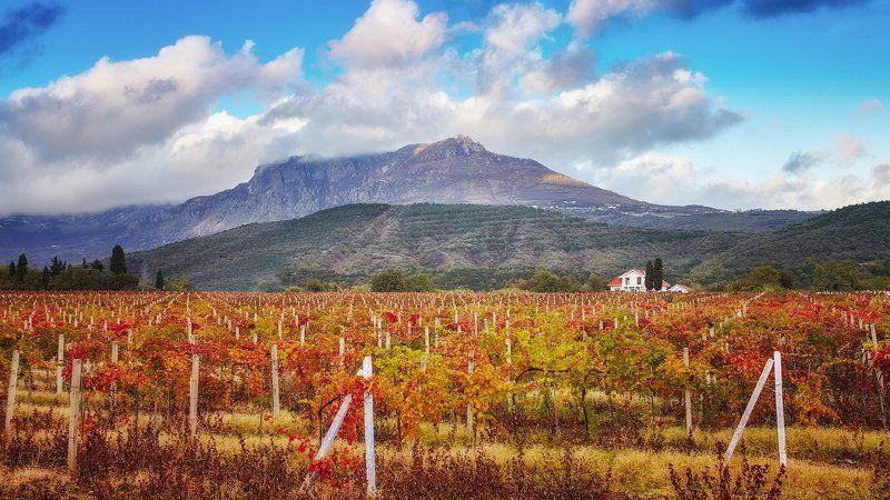горы, ю.демерджи, виноградник, осень, облака ***photo preview