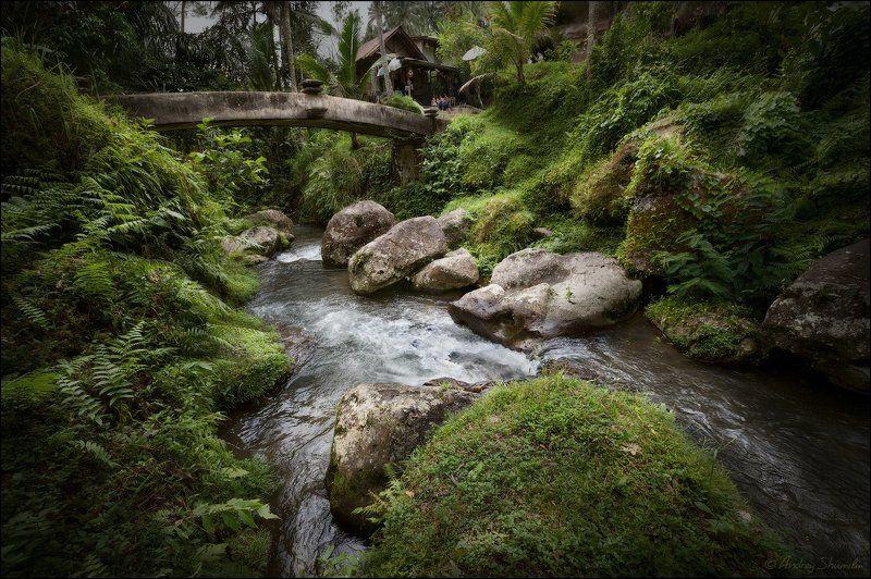 Ручей в джунгляхphoto preview