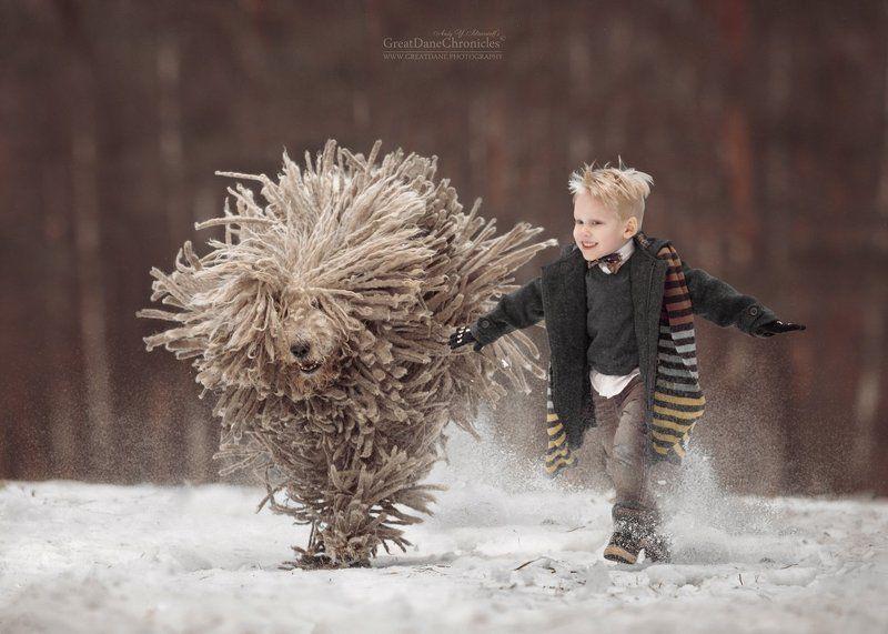 Комондор, Венгерская овчарка, Собака, Зима, Ребенок Komondor - it is really cool!photo preview