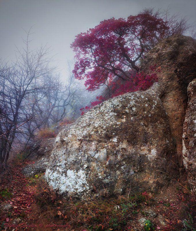 Краски осени. Ю.Демерджи.photo preview