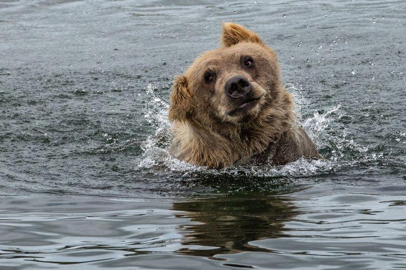 Аляска, США, Катмаи На рыбалкеphoto preview