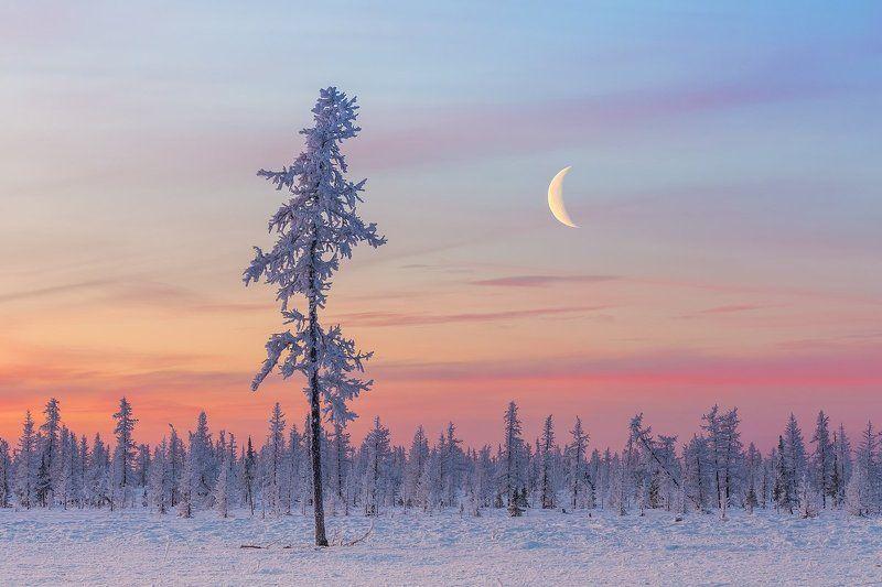 мороз, лесотундра, рассвет, зима, лиственница, сумерки, ямал, урал, россия, пейзаж, крайний север, dawn, frost, taiga, twilight, yamal, urals, russia, landscape, far north Холодный северный месяцphoto preview