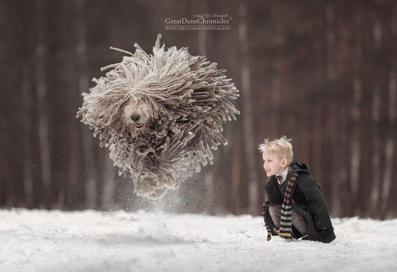 командор, венгерская овчарка, дети, зима, полет Волшебный полет дикой швабрыphoto preview