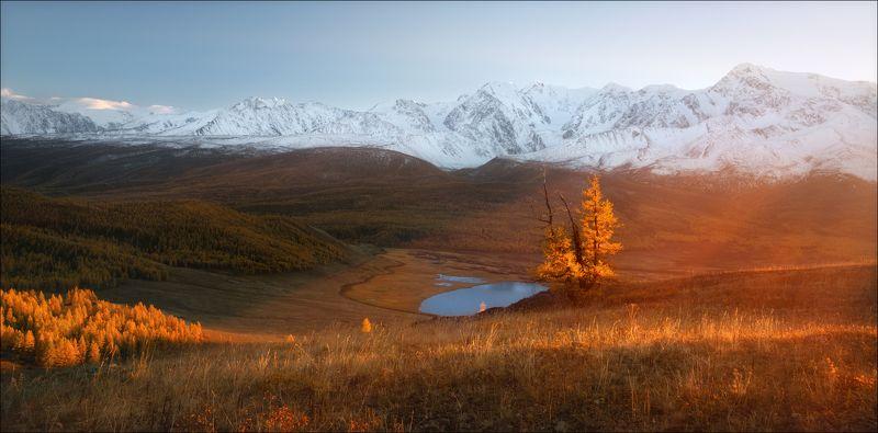 алтай, джангысколь, ештыколь, золото, осень, горы, северо-чуйский хребет, монголия, беркутчи, осень, фототур, Золото Алтаяphoto preview