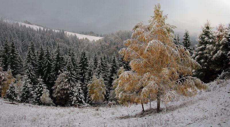В осенне-зимнем нарядеphoto preview