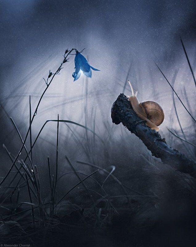 украина, коростышев, лето, лес, макро, макро мир, природа, макро-красота, Путь сердцаphoto preview