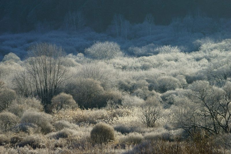 asia,korea,gangwondo,mountain,valley,morning,winter,rime,sunlight,backlight,nature,forest Rime in the mountain valleyphoto preview