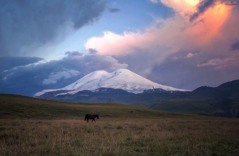 эльбрус, рассвет, россия, лошадь Один в полеphoto preview