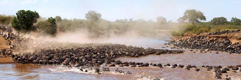 Большая миграция, Кения Большая миграцияphoto preview