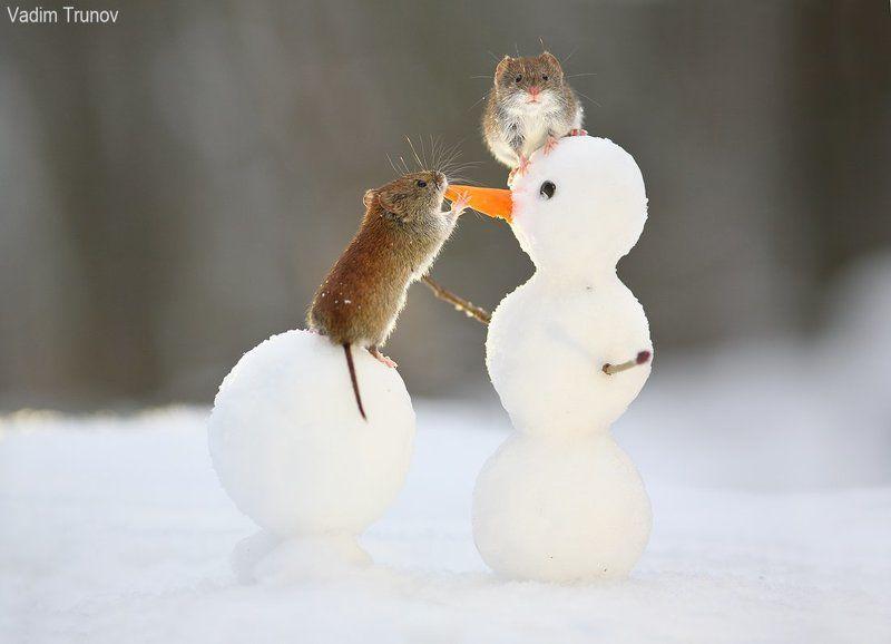 Про мышей и снеговикаphoto preview