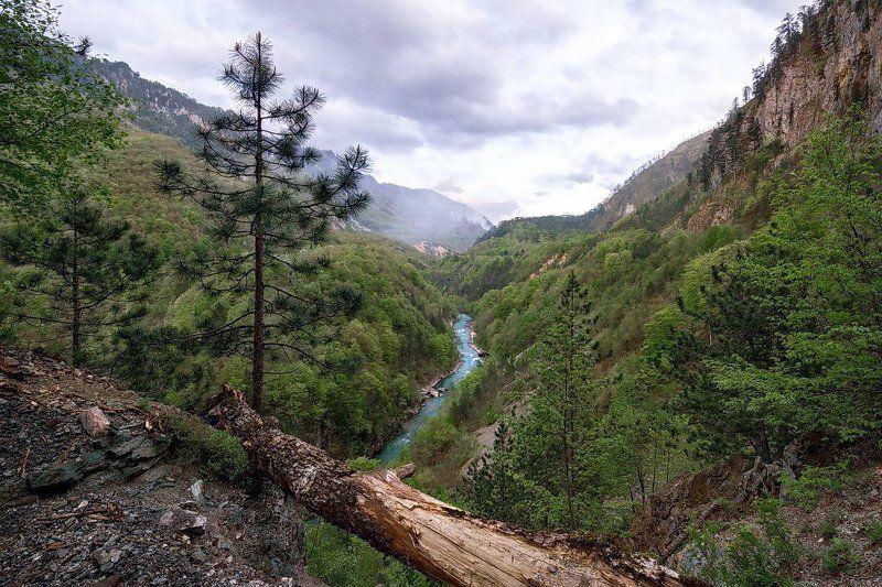 Черногория, река, ущелье, обрыв, Тара, каньон Каньон реки Тараphoto preview